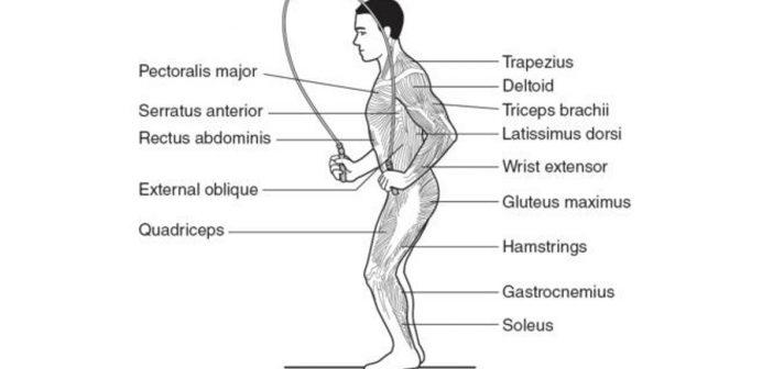 تعرف على الفوائد الكبيرة لرياضة نط الحبل skipping rope