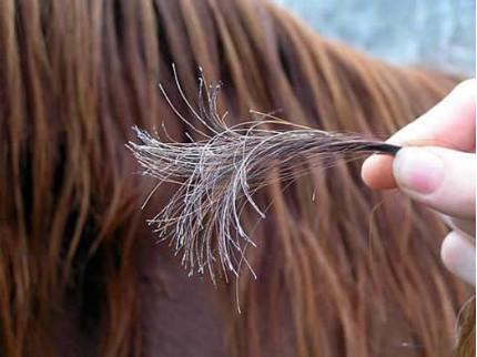 العناية بالشعر خاصة الشعر الطويل خلال ايام الصيف